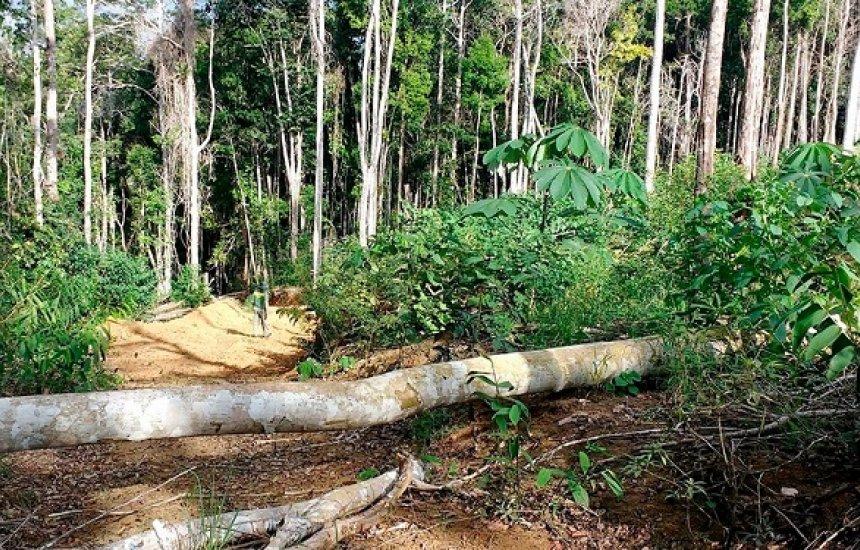 [Operação 'Mata Atlântica em Pé' detecta mais de 400 hectares de áreas desmatadas na Bahia]