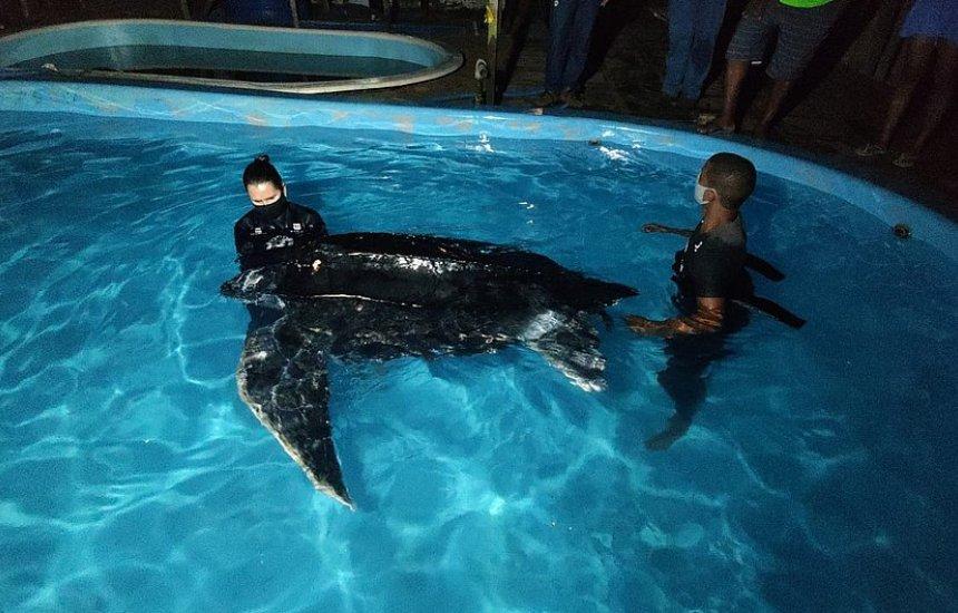 [Tartaruga ameaçada de extinção é resgatada após encalhar pela 3ª vez na Bahia]