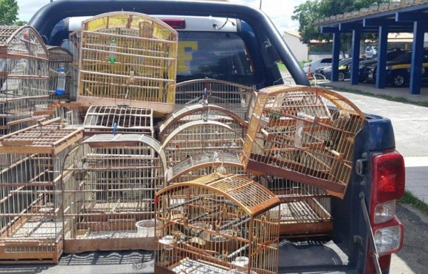 [PRF apreende 36 animais silvestres mantidos em cativeiro na BR-324]